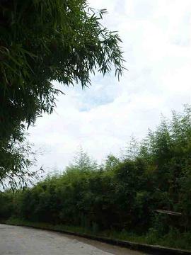 竹洞天旅游景点攻略图