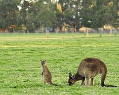 澳洲——享受自然的天堂