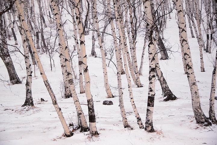 """""""...缚,而如今活脱脱的没有任何束缚的马立于眼前,健壮之美丽与雪域草原的宽广更显自然生物的自由与快乐_夹皮沟""""的评论图片"""