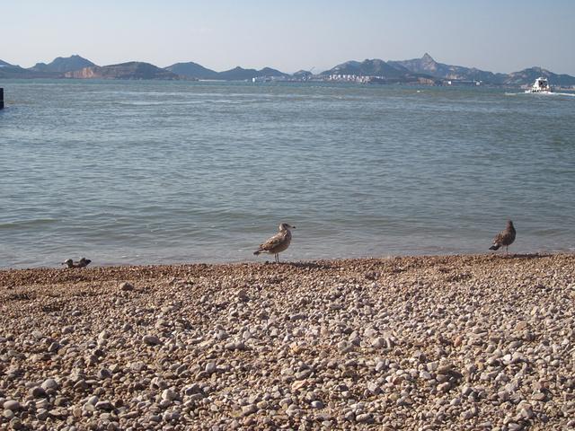 """""""登上岛后,就看到几个小家伙,这个季节不是来海驴岛最好的季节,海鸥不多,但不影响整体景色。等待的人群_海驴岛""""的评论图片"""