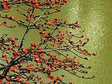 攀枝花旅游景点攻略图片