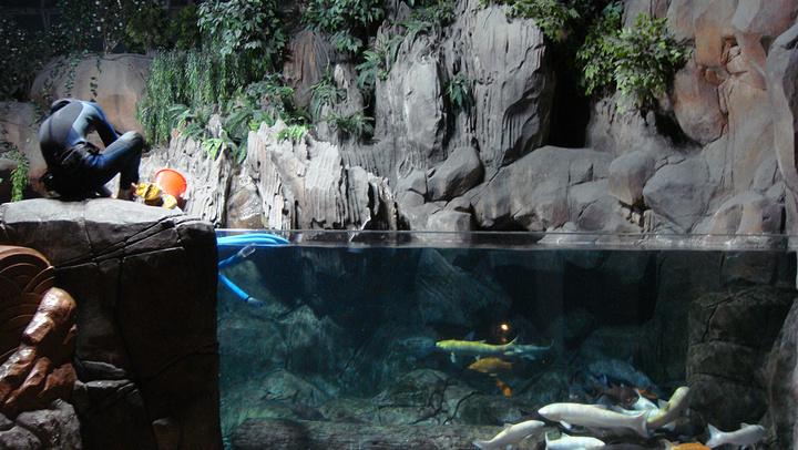 """""""水族馆成人门票160元/人,儿童110元,价格不低,如果带小朋友的话还是十分推荐的_上海海洋水族馆""""的评论图片"""