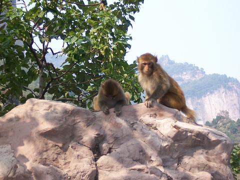 太行山猕猴国家级自然保护区旅游景点图片