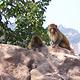太行山猕猴国家级自然保护区