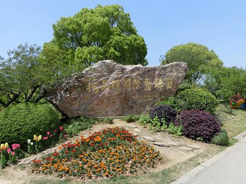 梅园的图片