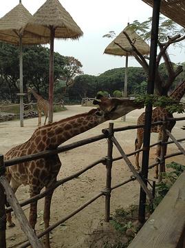 深圳野生动物园旅游景点攻略图