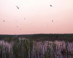 衡水湖赏鸟