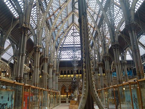 皮特·里弗斯博物馆旅游景点图片