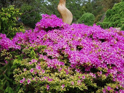 阿布哈兹花园旅游景点图片