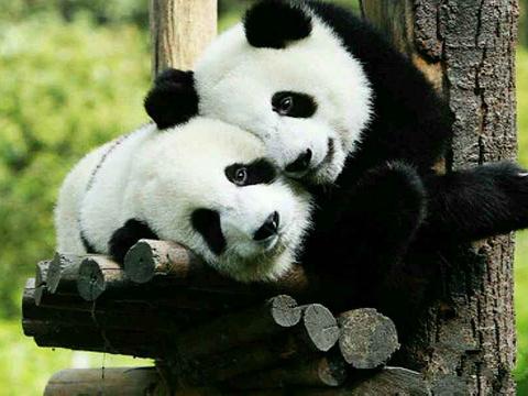 秦岭野生动物园旅游景点图片