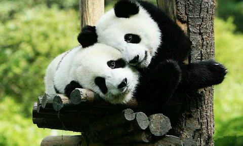 秦岭野生动物园的图片