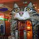 古晋猫咪博物馆