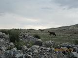 博尔塔拉旅游景点攻略图片