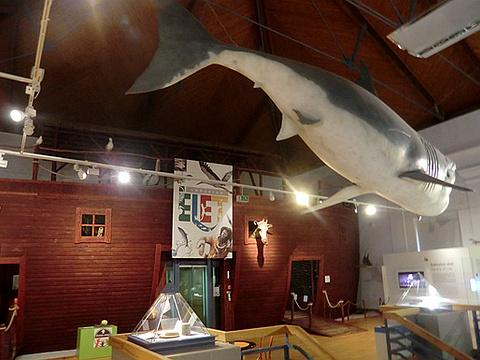 匈牙利自然历史博物馆旅游景点图片