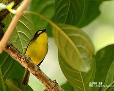 巴西·里约热内卢植物园观光记