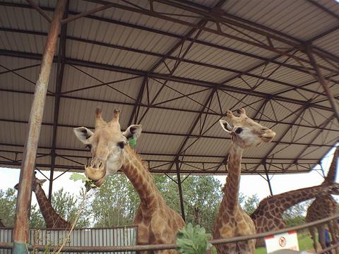 秦皇岛野生动物园旅游景点图片
