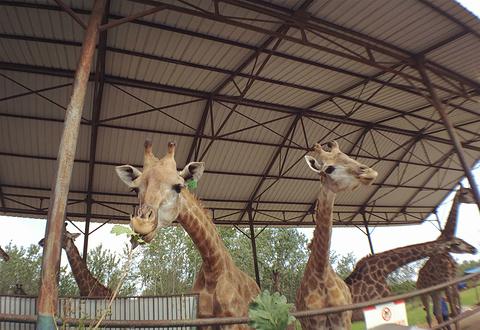 秦皇岛野生动物园的图片