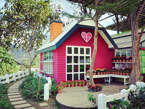 草莓园旅游景点图片