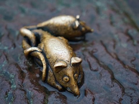 铜猴旅游景点图片