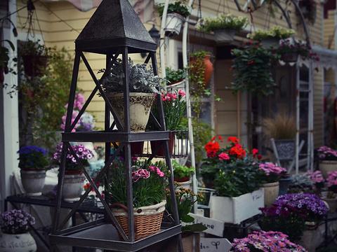 荷兰花卉小镇旅游景点图片