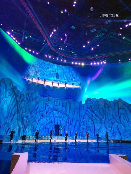 白鲸剧场表演图片
