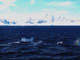 南极旅游景点攻略图片
