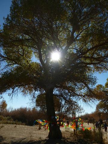 """""""梦想跟现实确实有差距,个人觉得神树看点不大,没必要特地去看,经过的话可以进去转转,门票10元..._额济纳神树""""的评论图片"""