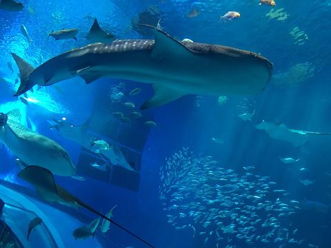 冲绳美丽海水族馆旅游景点攻略图