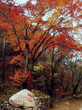 汤沟森林公园旅游景点攻略图