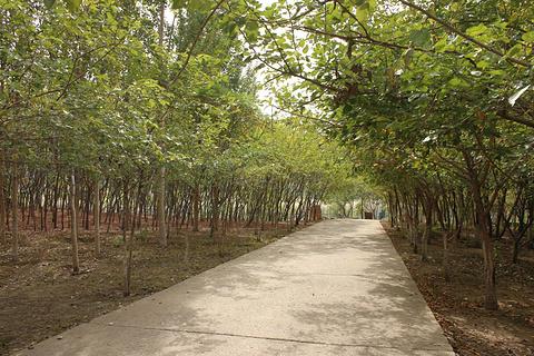 枫叶广场旅游景点攻略图