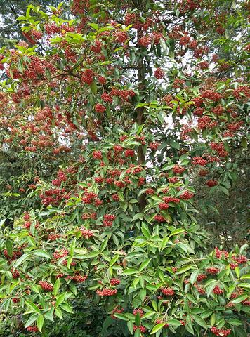 """""""...两三朋友,买点水果和零食去植物园欣赏美景了,我觉得10月到11月来植物园看枫叶飘落是最好的时间_昆明植物园""""的评论图片"""