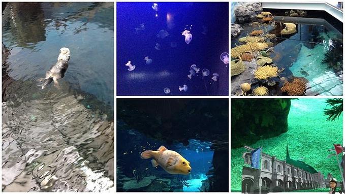 里斯本海洋馆图片