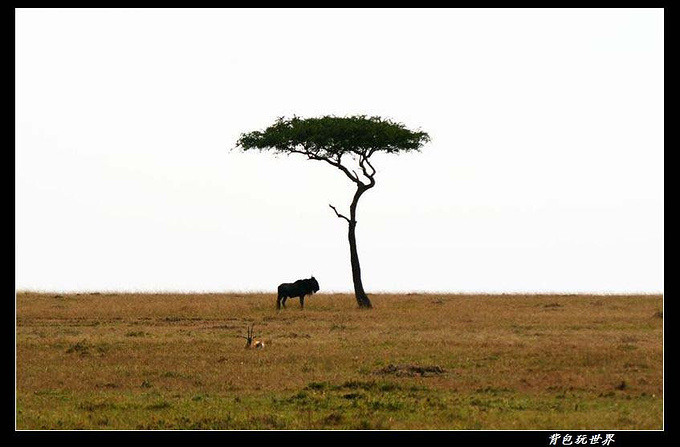 暂别东非图片