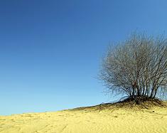 穿行库布齐沙漠,花样游记