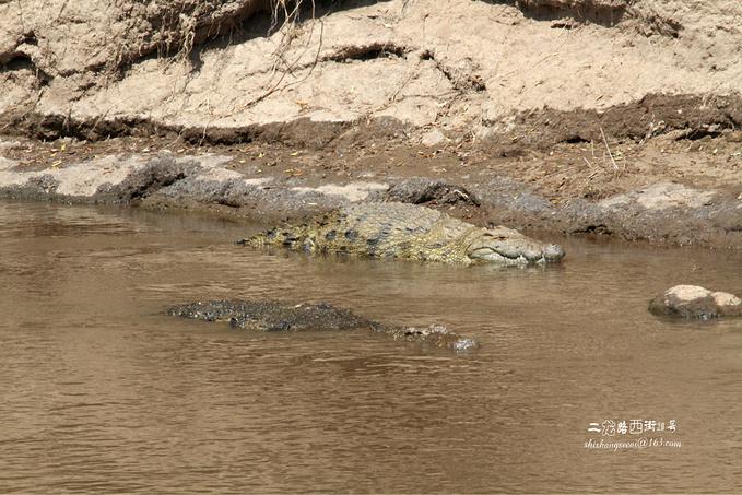 马拉河图片