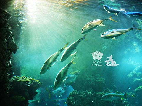 摩纳哥海洋馆旅游景点图片