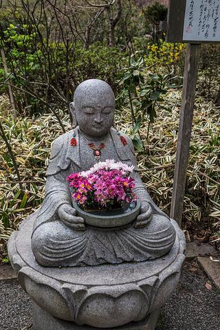 """""""这里最著名的紫阳花的开花季节为6月_明月院""""的评论图片"""