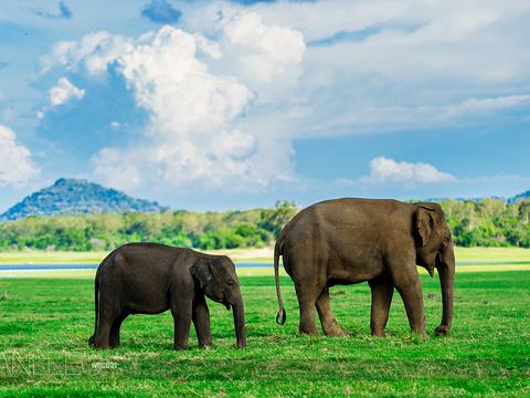 米内日亚国家公园旅游景点图片