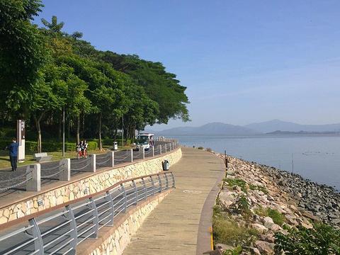 深圳湾公园旅游景点图片