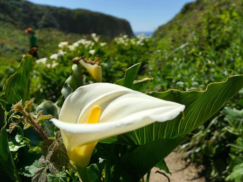 加拉帕塔国家公园旅游景点图片