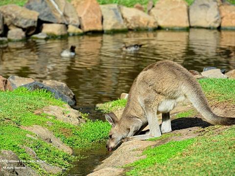 可伦宾野生动物保护园旅游景点图片
