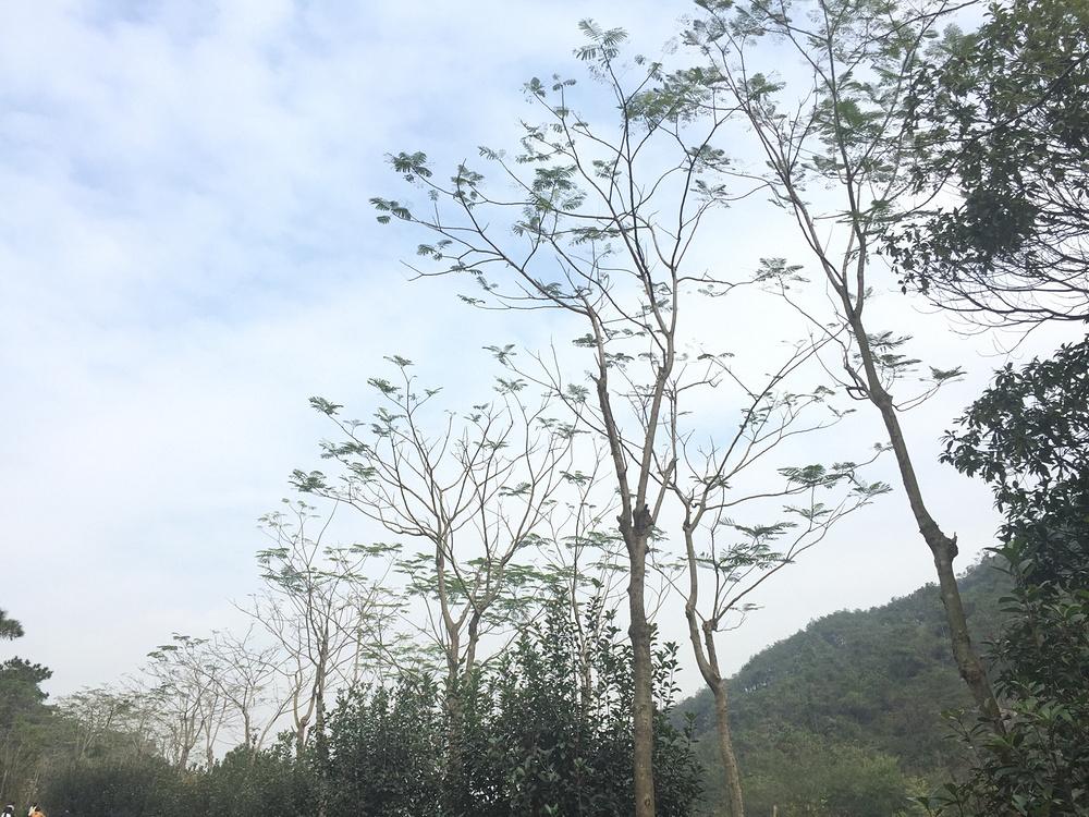 中山金钟水库