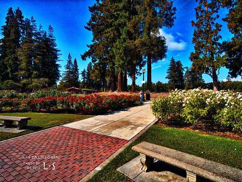 市立玫瑰园旅游景点图片