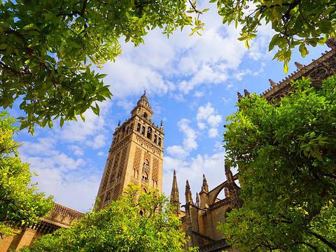 塞维利亚大教堂旅游景点图片