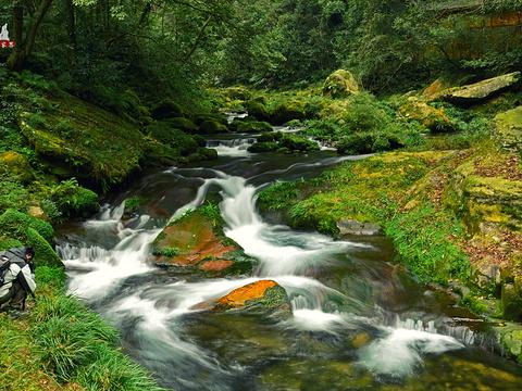 金鞭溪旅游景点图片