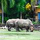 巴厘野生动物园