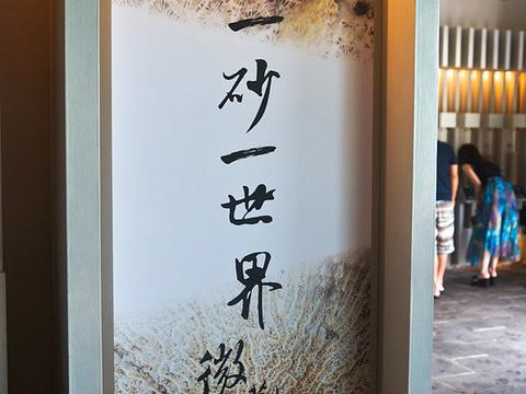 砂岛贝壳砂展示馆旅游景点图片