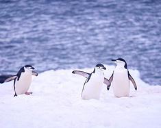从复活节岛 一路去南极