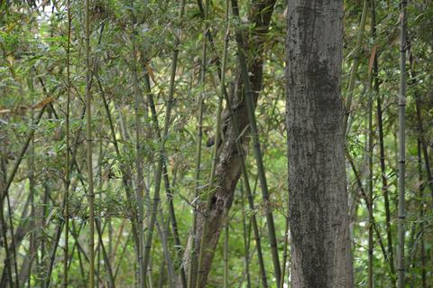 西溪国家湿地公园旅游景点攻略图