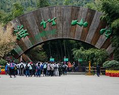 南山竹海:饱览隐居竹林的宁静生活
